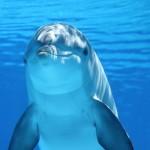 Delfin (Claudia14-pixabay)