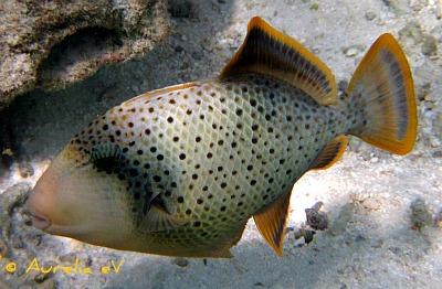 Meeresbiologie Fachprogramme von Aurelia eV