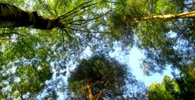Naturwissenschaftler warnen: Die Natur braucht unseren Schutz