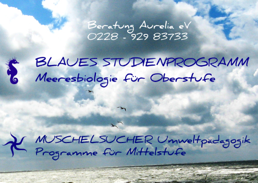 Blaue Studienprogramme & MUSCHELSUCHER-Programme