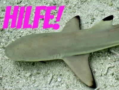 Der Hai braucht unsere Hilfe
