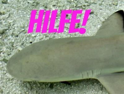 Der Hai braucht unsere Hilfe!