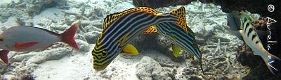 Fische in der spannenden Unterwasserwelt