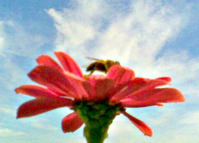 rote Blume vor blauem Himmel