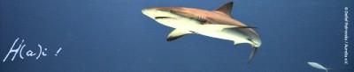 Shark / Hai © Detlef Patrovsky / Aurelia e.V.