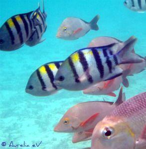 Bunte Fische beobachten auf Klassenfahrten