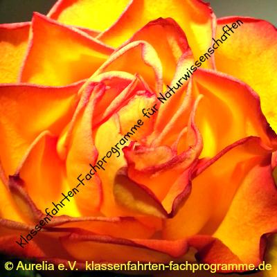 Klassenfahrten-Fachprogramme für Naturwissenschaften von Aurelia e.V.