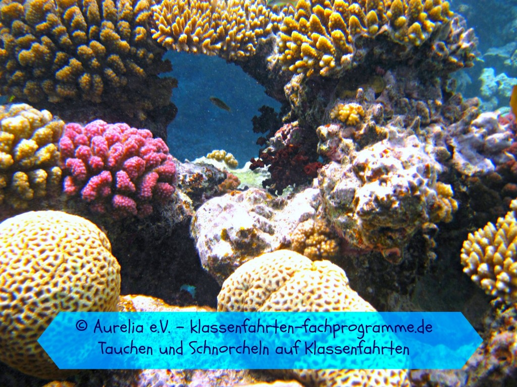 Korallen im Meer