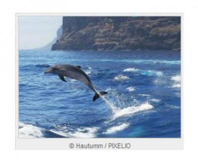 Delfine im Meer beobachten.