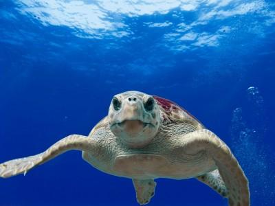 Schildkröte (tpsdave-pixabay)