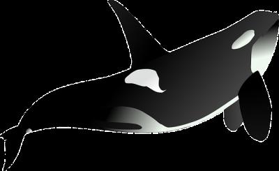 Wal - Orca