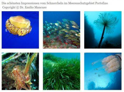 Meeresschutzgebiet Portofino