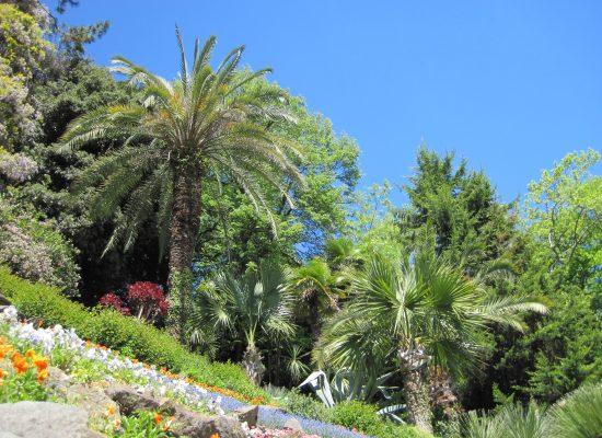 Palmen und Blumen