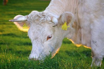 Ökologische Landwirtschaft im Allgäu