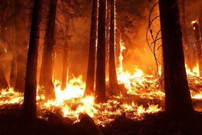 Waldbrände durch Klimawandel?