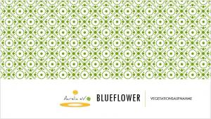 BLUEFLOWER Vegetationsaufnahme